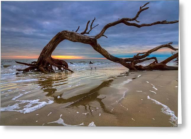 Foggy Beach Greeting Cards - Driftwood II Greeting Card by Debra and Dave Vanderlaan