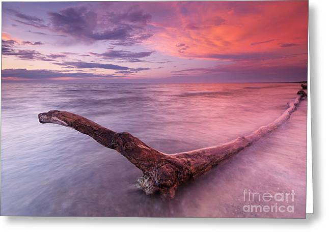 Beach Scenery Greeting Cards - Driftwood in colorful sunset scenery at lake Huron Ontario Greeting Card by Oleksiy Maksymenko
