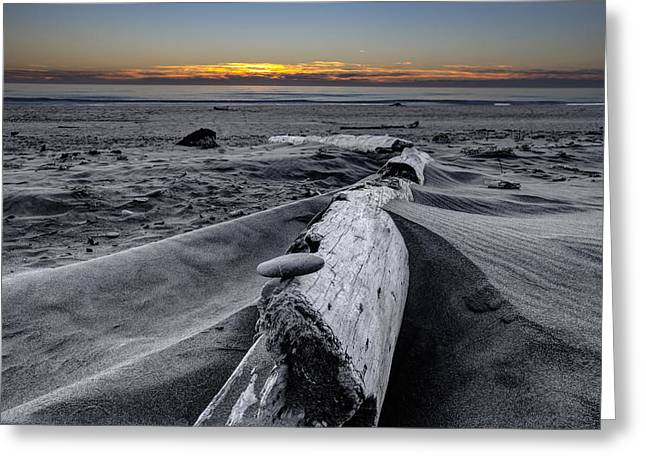Sandy Point Park Greeting Cards - Driftwood in the Sand Greeting Card by Debra and Dave Vanderlaan