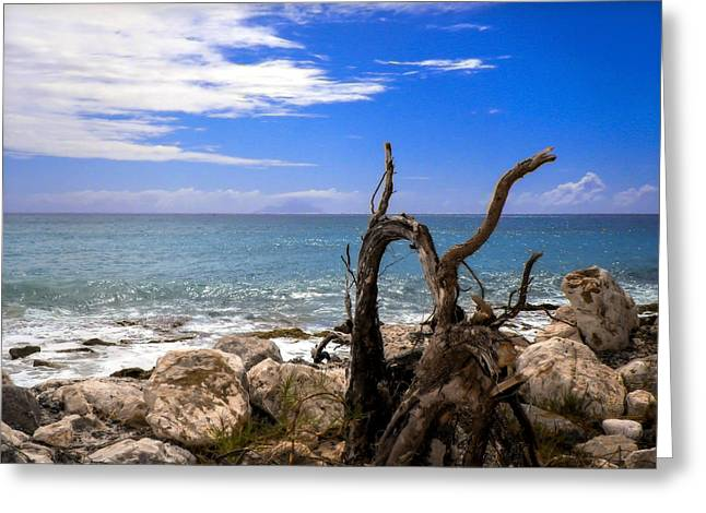 Driftwood Greeting Cards - Driftwood Island Greeting Card by Karen Wiles