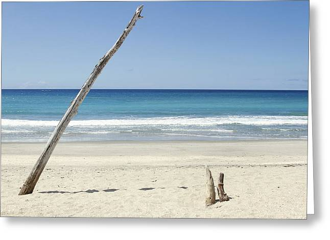 Beautiful Scenery Greeting Cards - Driftwood Greeting Card by Les Cunliffe