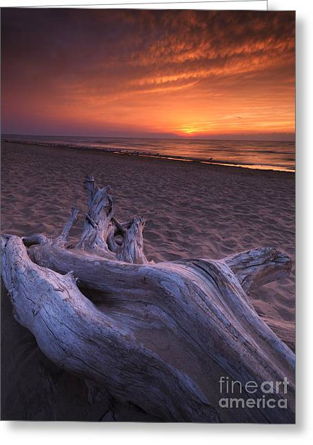 Dry Lake Greeting Cards - Driftwood on a shore of lake Huron sunset scenery Greeting Card by Oleksiy Maksymenko