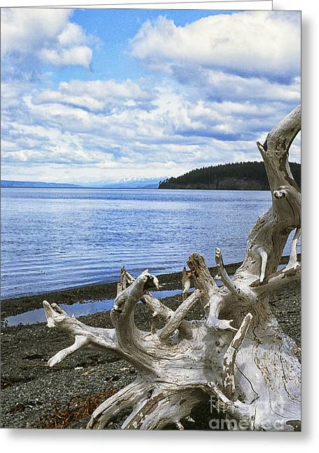 Peterson Greeting Cards - Driftwood on Beach Greeting Card by Thomas R Fletcher