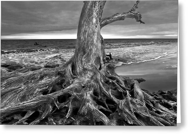 Driftwood On Jekyll Island Black And White Greeting Card by Debra and Dave Vanderlaan