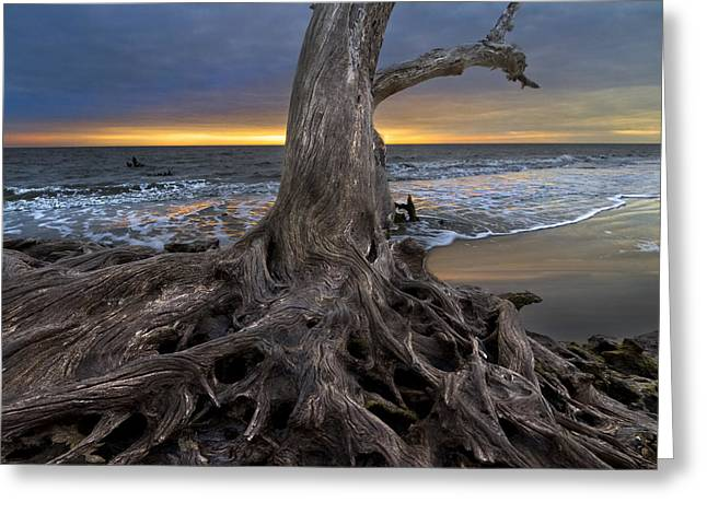Ga Greeting Cards - Driftwood on Jekyll Island Greeting Card by Debra and Dave Vanderlaan
