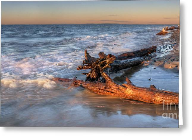 Driftwood On Lake Superior Greeting Card by Twenty Two North Photography