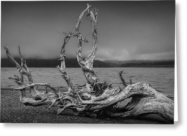 Foggy Beach Greeting Cards - Driftwood on the Beach in the Bay at Port Renfew Greeting Card by Randall Nyhof