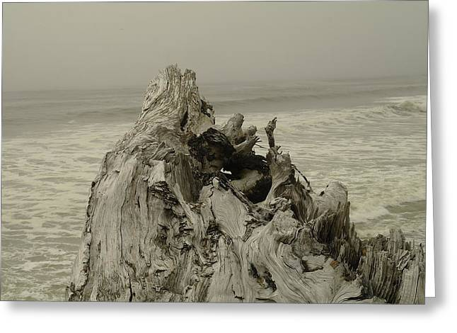 Driftwood On The Beach Greeting Card by Jeff Swan