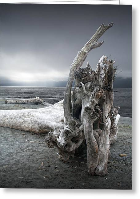 Foggy Beach Greeting Cards - Driftwood on the Beach Greeting Card by Randall Nyhof