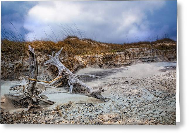 Driftwood On The Dunes Greeting Card by Debra and Dave Vanderlaan