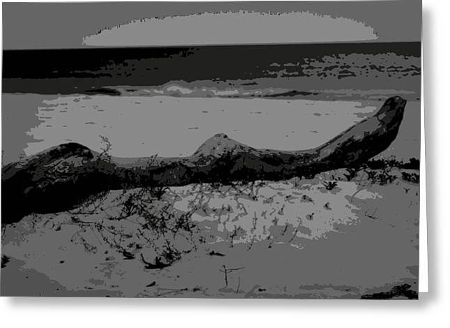 Florida Panhandle Digital Art Greeting Cards - Driftwood on the Shore Greeting Card by Laurie Pike