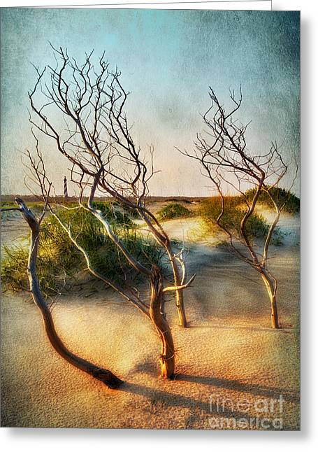 Sea Oats Greeting Cards - Driftwood Sand Dunes and Lighthouses II Greeting Card by Dan Carmichael