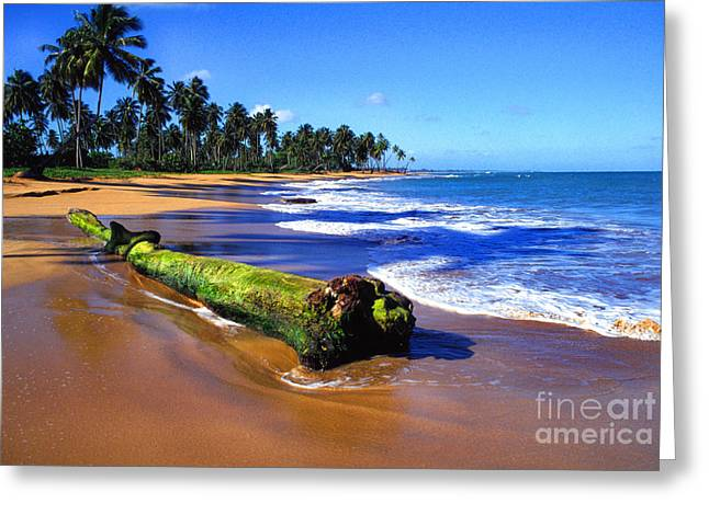 Puerto Rico Greeting Cards - Driftwood Sea Palms Greeting Card by Thomas R Fletcher