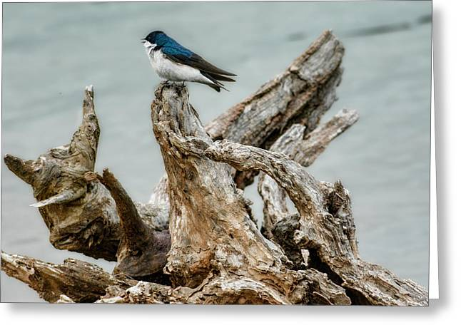 Driftwood Song Greeting Card by Jai Johnson