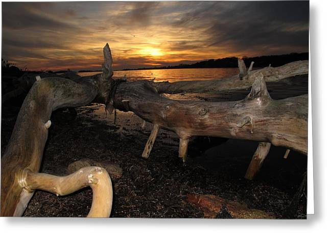 04003 Greeting Cards - Driftwood Sunset Greeting Card by Donnie Freeman