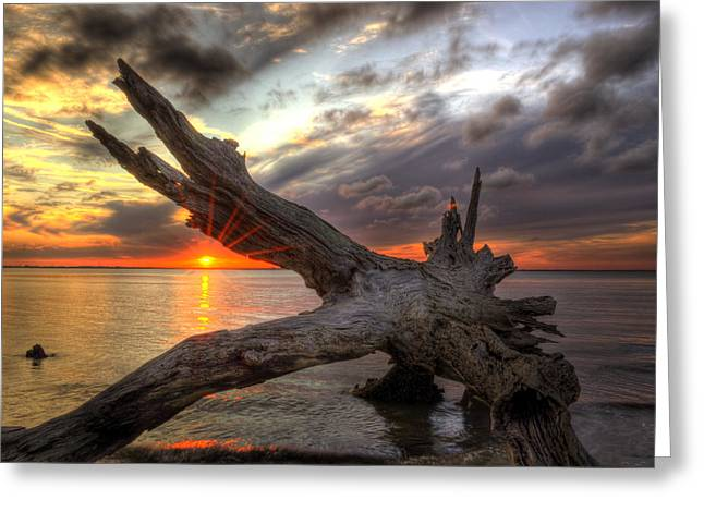 Jekyll Greeting Cards - Driftwood Sunset Greeting Card by Greg and Chrystal Mimbs