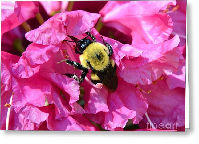 Struckle Greeting Cards - Drinking Nectar Greeting Card by Kathleen Struckle