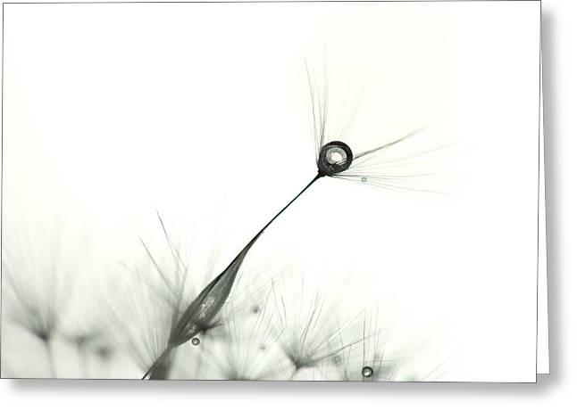 Drip Greeting Cards - Drip Greeting Card by Jana Behr