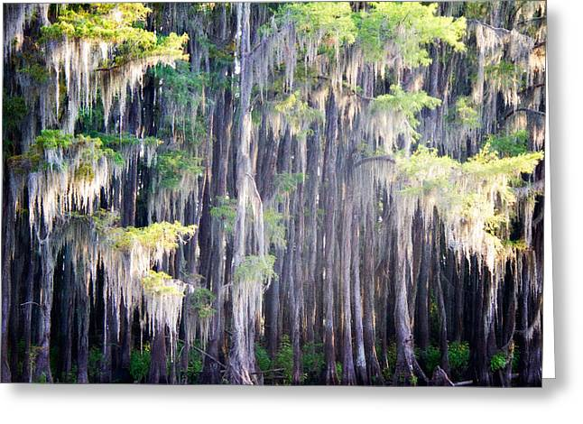 Dripping Moss Greeting Card by Lana Trussell