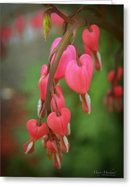 With Love Photographs Greeting Cards - Dripping With Love Greeting Card by Mary Machare