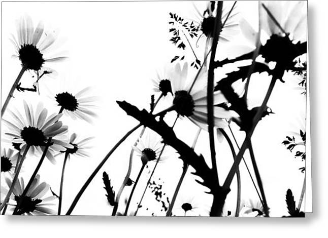 White Daises Greeting Cards - Drips That grow  Greeting Card by Jerry Cordeiro