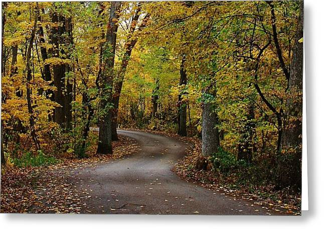Oregon Illinois Greeting Cards - Drive Through the woods Greeting Card by Bruce Bley