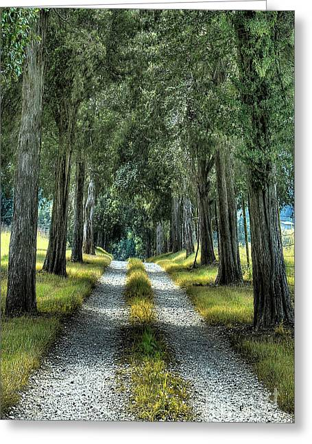 Gravel Road Digital Art Greeting Cards - Driveway To Where Greeting Card by Sari Sauls