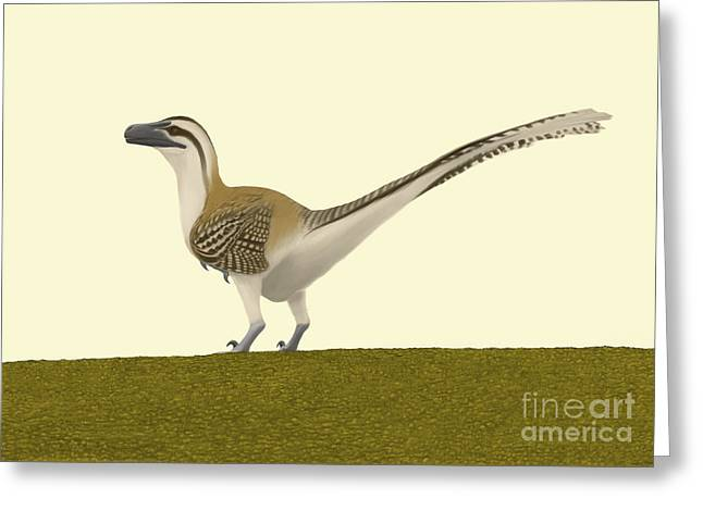 Dromaeosaurid Greeting Cards - Dromaeosaurus Albertensis Greeting Card by Michele Dessi