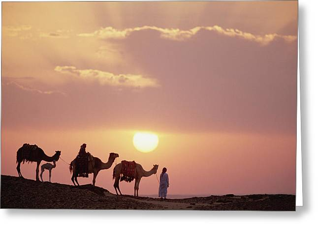 Dromedary Greeting Cards - Dromedary Camels And Bedouins Sahara Greeting Card by Gerry Ellis