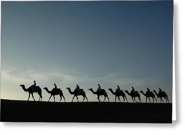 Backlit Greeting Cards - Dromedary Camels in Thar Desert Greeting Card by Pete Oxford