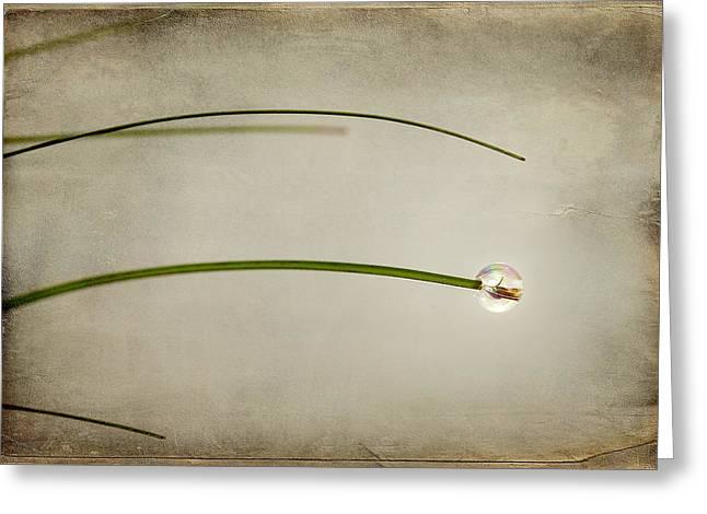 Romance Mixed Media Greeting Cards - Drop Greeting Card by Svetlana Sewell