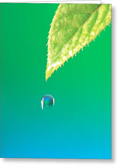 Smoothness Greeting Cards - Droplet Falling From Green Leaf Greeting Card by Panoramic Images