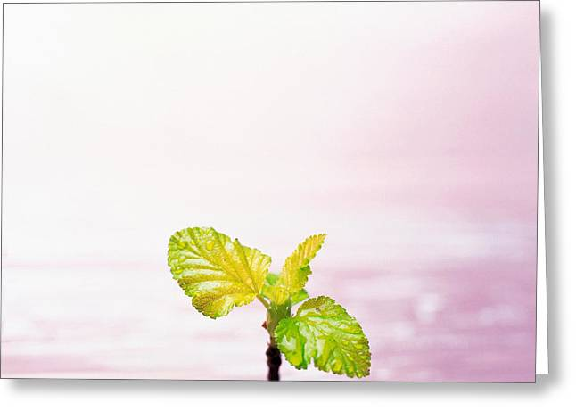 Flora Photography Greeting Cards - Droplet On Plant Leaf, Close Greeting Card by Panoramic Images