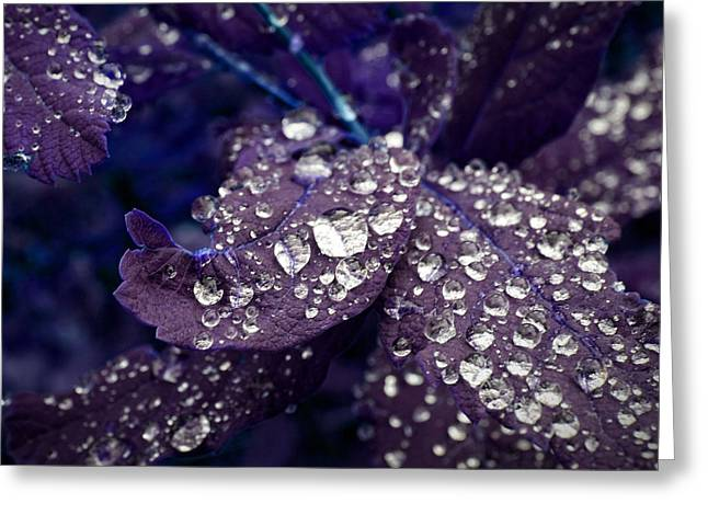 Droplet Digital Art Greeting Cards - Droplets Greeting Card by Nth Alien