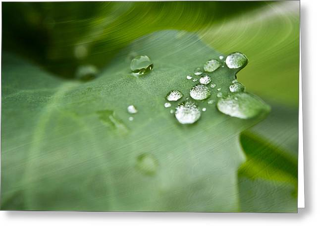 Dew Digital Greeting Cards - Droplets on Green Greeting Card by Melissa Smith