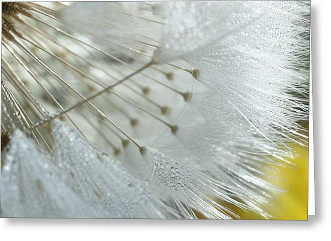 Dandilion Greeting Cards - Drops of Sunlight Greeting Card by JC Findley