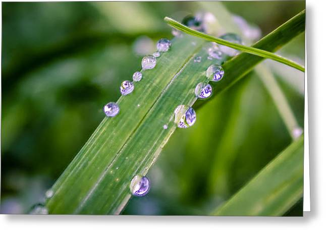 Dewdrops Digital Greeting Cards - Drops On Grass Greeting Card by Rob Sellers