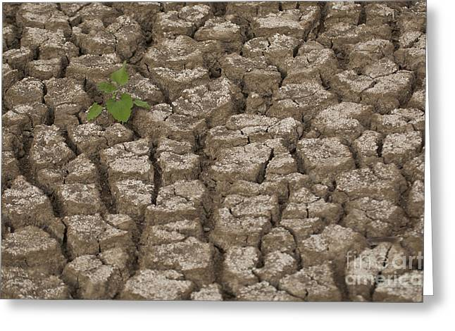 Desertification Greeting Cards - Dry cracked mud  Greeting Card by Eyal Bartov