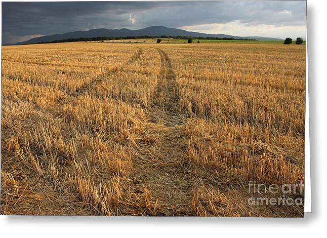 Summer Wheat Greeting Cards - Dry Field Road in the Countryside Greeting Card by Kiril Stanchev