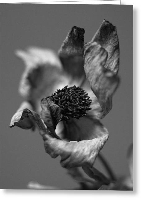 Imaginative Greeting Cards - Dry flower Greeting Card by Marcio Faustino