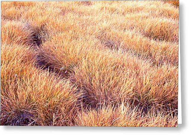 Fall Grass Greeting Cards - Dry Grass In A National Park, South Greeting Card by Panoramic Images