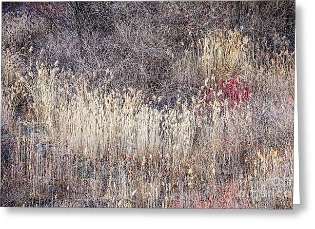 Muted Photographs Greeting Cards - Dry grasses and bare trees in winter forest Greeting Card by Elena Elisseeva