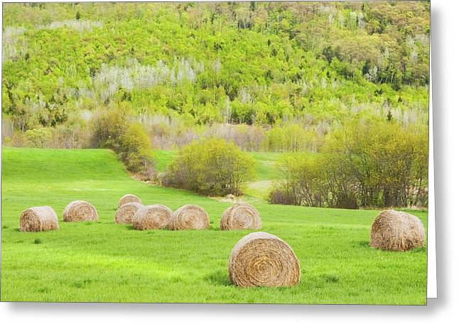 Dry Hay Bales In Spring Farm Field Maine Greeting Card by Keith Webber Jr