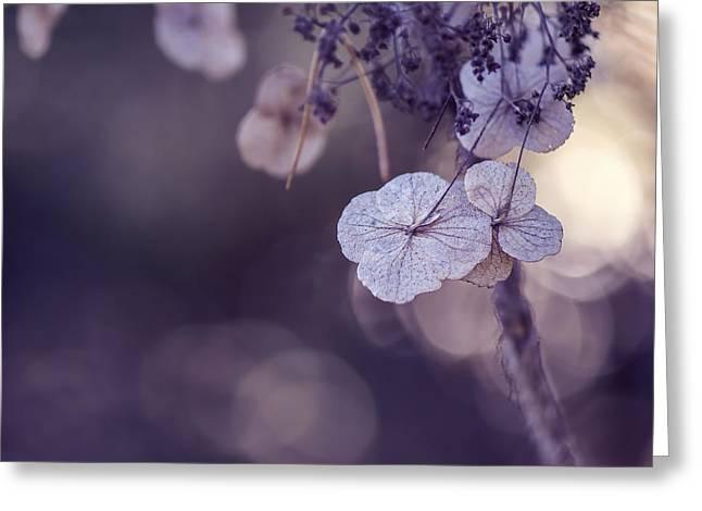 Macro Micro Greeting Cards - Dry Hydrangea Flower - VanDusen Botanical Garden Greeting Card by May L