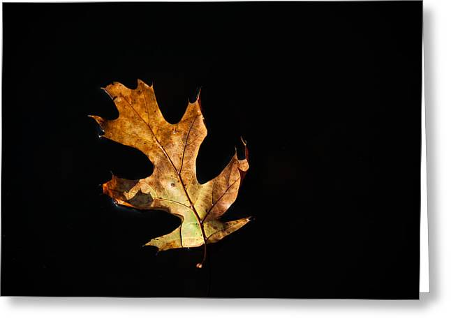 Brown Leaf Greeting Cards - Dry on Water Greeting Card by Karol  Livote