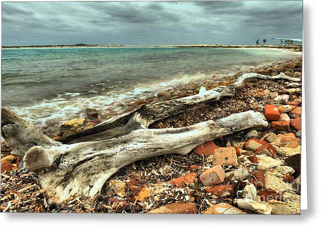 Dry Tortugas National Park Greeting Cards - Dry Tortugas Driftwood Greeting Card by Adam Jewell