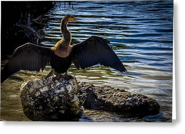 Cormorants Greeting Cards - Drying Time Greeting Card by Marvin Spates