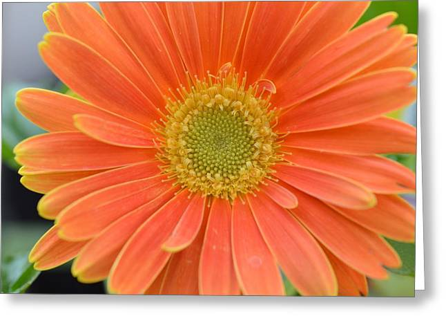 Kim Photographs Greeting Cards - Dsc961 Greeting Card by Kimberlie Gerner