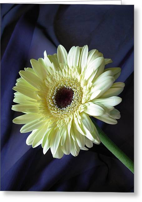Kim Photographs Greeting Cards - Dscn80251c Greeting Card by Kimberlie Gerner