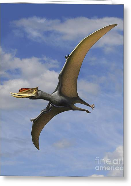 Paleoart Greeting Cards - Dsungaripterus Weii, A Pterosaur That Greeting Card by Sergey Krasovskiy